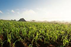Campo ed essiccatore di tabacco nella valle Cuba di Vinales Fotografia Stock Libera da Diritti