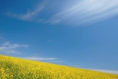 Campo ed il cielo Immagini Stock