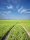 Campo ed il cielo Fotografie Stock Libere da Diritti