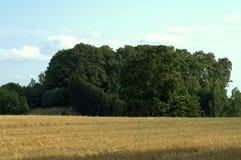 Campo em agosto Foto de Stock