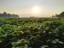 Campo em do norte de Tailândia Fotos de Stock