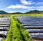 Campo em Java Foto de Stock