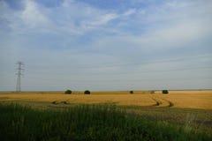 Campo em República Checa Foto de Stock