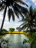 Campo em Vietname do sul Imagens de Stock Royalty Free