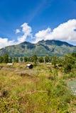 Campo en Bali Fotos de archivo libres de regalías
