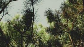 Campo en bosque de la mañana cerca del mar Cocinar la comida en una hoguera en vida del forestCamp traveling metrajes