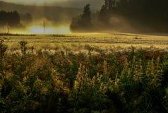Campo en el sol de la mañana Imágenes de archivo libres de regalías