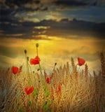 Campo en el tiempo de la puesta del sol Foto de archivo libre de regalías