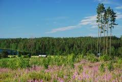 Campo en Hankasalmi de Finlandia central Foto de archivo