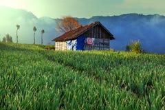 Campo en Indonesia foto de archivo libre de regalías