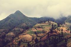 Campo en Indonesia fotografía de archivo libre de regalías