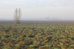Campo en invierno con niebla y árboles sin las hojas Fotos de archivo