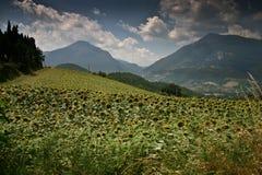 Campo en Italia Fotografía de archivo libre de regalías