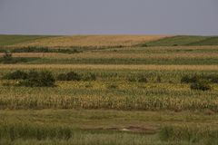 Campo en la caída, después de cosechar maíz fotografía de archivo libre de regalías