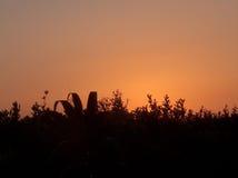 Campo en la puesta del sol Fotografía de archivo