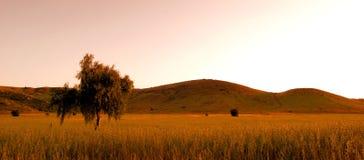 Campo en la puesta del sol en Poway Foto de archivo libre de regalías