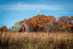 Campo en otoño imágenes de archivo libres de regalías