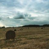 Campo en otoño Imagenes de archivo