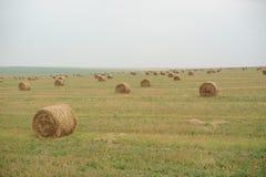 Campo en otoño Imagen de archivo libre de regalías