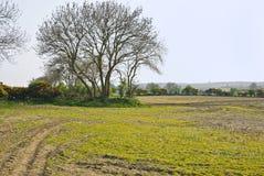 Campo en primavera Fotos de archivo