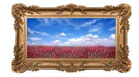 Campo enmarcado de flores bastante rojas y de S hermoso Foto de archivo libre de regalías