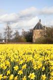 Campo enorme de las flores del narciso Imagenes de archivo
