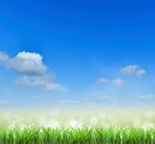 Campo Erba e cielo Fondo Immagini Stock Libere da Diritti