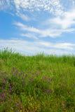 Campo erboso con il cielo nuvoloso e l'erba verde Fotografie Stock