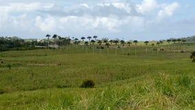 Campo erboso verde con le nuvole stock footage