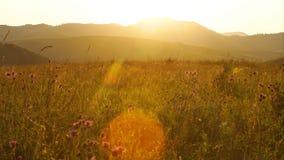 Campo escénico con los wildflowers en Altai, Rusia almacen de video