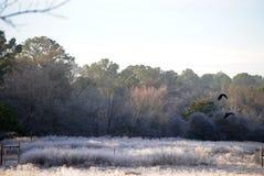 Campo escarchado con la luz y los cuervos de la mañana Fotografía de archivo libre de regalías