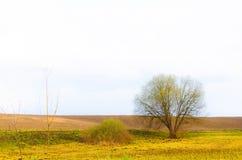 Campo escuro da mola com a árvore só nela Fotos de Stock Royalty Free