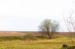 Campo escuro da mola com a árvore só nela Foto de Stock
