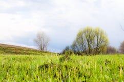 Campo escuro da mola com a árvore só nela Fotografia de Stock Royalty Free
