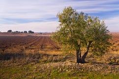 Campo espanhol Fotografia de Stock Royalty Free