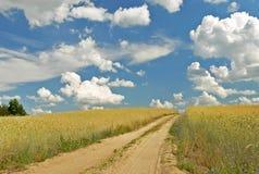 Campo - estrada entre o cereal Foto de Stock Royalty Free
