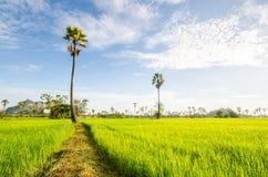 Campo, exploração agrícola, campo de milho, natureza, árvore, verde Fotografia de Stock