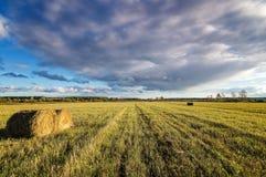 Campo, feno, colheita, exploração agrícola, rural, pilha, palha, grama, outono, terra, setembro, agosto, verão, exploração agríco Imagem de Stock Royalty Free