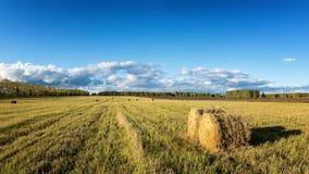 Campo, feno, colheita, exploração agrícola, rural, pilha, palha, grama, outono, terra, setembro, agosto, verão, exploração agríco Fotos de Stock