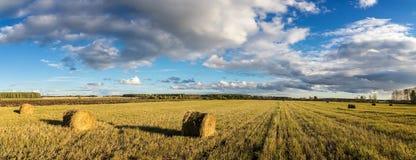 Campo, fieno, raccolto, azienda agricola, rurale, pila, paglia, erba, autunno, terra, settembre, augusto, estate, azienda agricol immagine stock