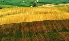 Campo file dei raccolti agricoli germogliati campo collinoso pittoresco Campo agricolo in primavera Immagini Stock