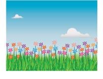 Campo floral Imagens de Stock