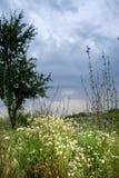 Campo floreciente Fotos de archivo