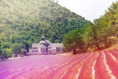 Campo floreciente de la lavanda en el monasterio de Senanque Imagen de archivo