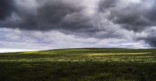 Campo floreciente de los campos Imagenes de archivo