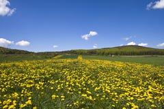 Campo florido. Imagen de archivo libre de regalías