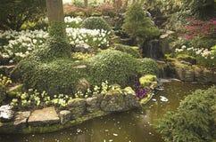 Campo Flowery Imagens de Stock