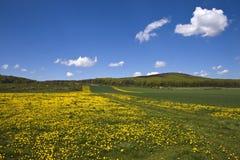 Campo Flowery. Imagem de Stock