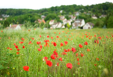 Campo francés con las amapolas florecientes Imágenes de archivo libres de regalías