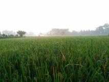 Campo fresco da manhã imagem de stock